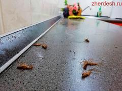 Уничтожение клопов тараканов навсегда