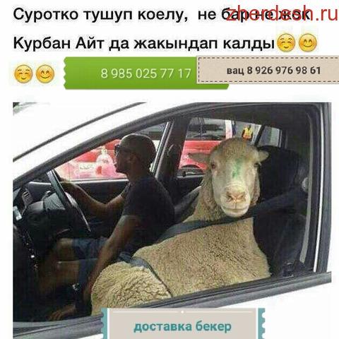 Ассалам алайкум.ОНЛАЙН КУРБАНДЫК