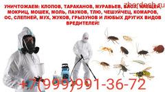 Уничтожение клоп тараканов
