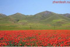 Срочно кыргызстанга кетем