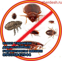 Уничтожение клопов тараканов на всегда