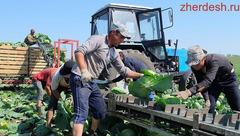 45000 руб/мес Работа в теплице с проживанием и питанием