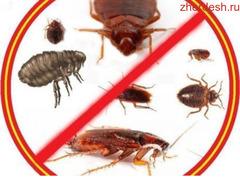 Клоп таракан дарылайбыз гарантия 6-ай