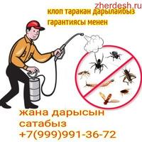 Клоп таракан даарылайбыз сертификат договор баары бар гарантия 6-ай