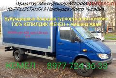 Жук Кыргызстанга