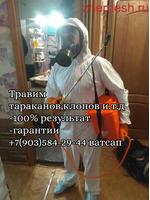 ХЛОП ТАРАКАН ЖОК КЫЛАБЫЗ КЕПИЛДИК БАР