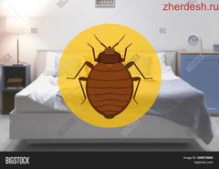Клопы и тараканы: как избавиться от непрошеных гостей в доме?